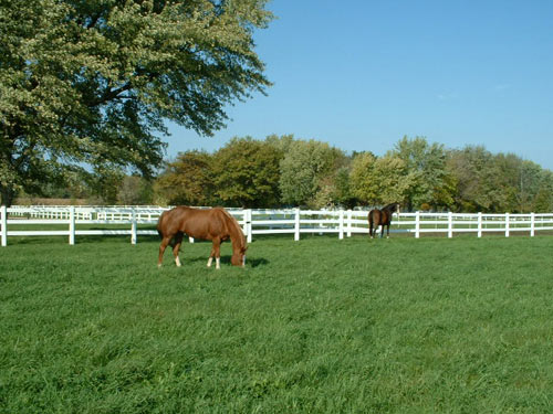 Horses Grazing Pasture Perfect in WI